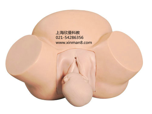 脐带的解剖结构图