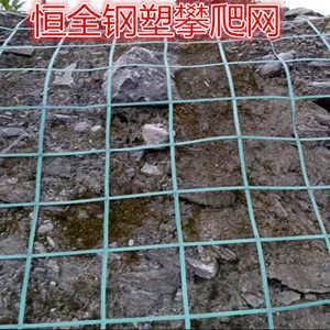 绿叶植物攀爬网 披山绿化攀爬网 恒全攀爬网厂家-安平县恒全金属丝网制品有限公司销售部