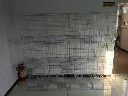 家养鸽子笼批发价格图片