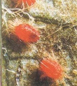 供应黑龙江柑橘杀螨剂 红蜘蛛杀螨剂 锈壁虱杀螨剂 茄子杀螨剂 柑橘杀螨剂