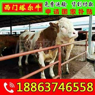 衡南县利木赞牛价格