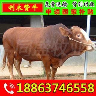 衡阳县种牛养殖场