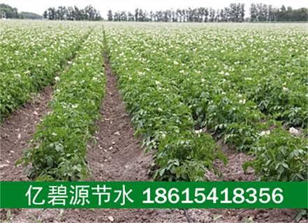 洛阳孟津县土豆滴灌设备多少钱一亩