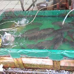 东莞帆布蓄水池生产厂 抗老化涂层蓄水池定做 佛山防水帆布批发