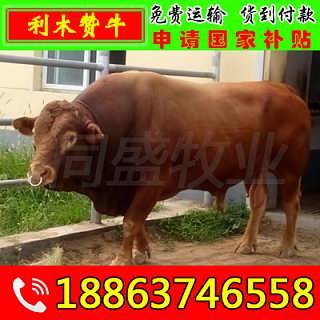 宜都肉牛养殖前景 山东富通肉牛养殖场
