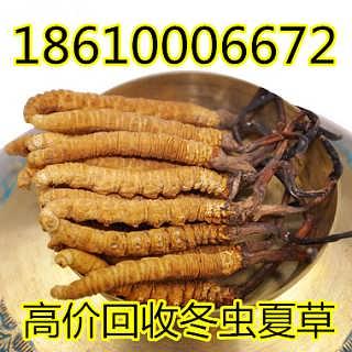 上门收购≮18610006672≯滨州回收冬虫夏草燕窝上门收购-刘利国(个人)