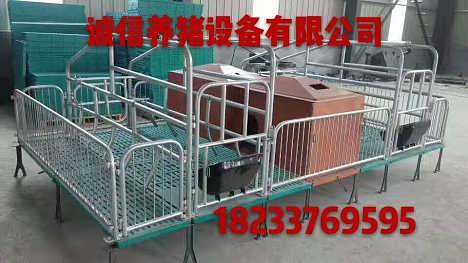 最新母猪产床图片养猪设备猪圈设备批发零售