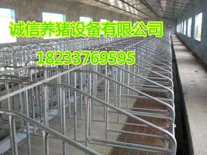 复合漏粪板母猪限位栏高质量养猪设备经销各种尺寸定位栏