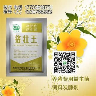 猪壮王发酵处理鸽子粪喂猪技术-郑州欣圣源农业科技有限公司