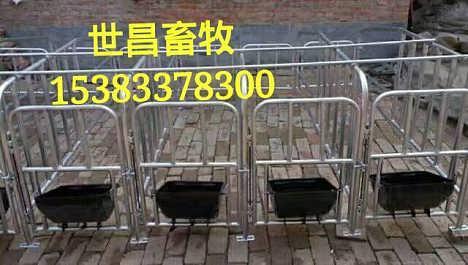 高效母猪限位栏猪场必备母猪定位栏