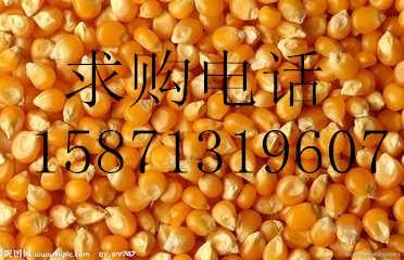 求购玉米、大豆、高粮、荞麦