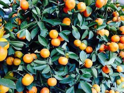 果树水溶肥的使用方法大放送-美年红农业科技(深圳)有限公司.
