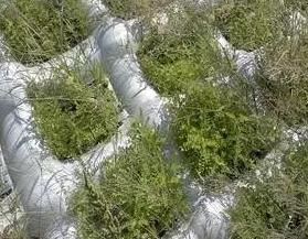 宏祥土工模袋堤坝护坡绿色环保