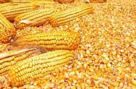 求购大量次粉麸皮玉米