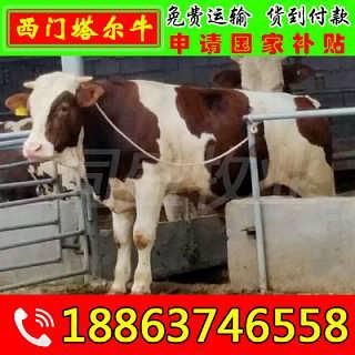 榆中县大型养牛场 山东富通肉牛养殖场