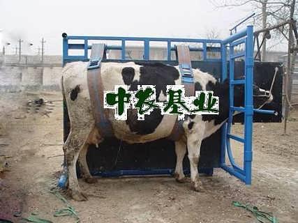 奶牛修蹄车