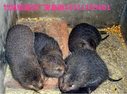 银星竹鼠日粮配方集锦