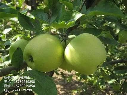 广东生物有机菌肥 厂家直优