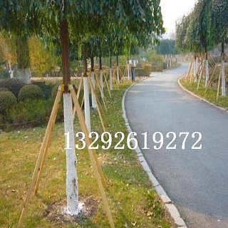 榆林神木县树木支撑杆厂家低价促销-霸州市欧诚园林绿化工程有限公司