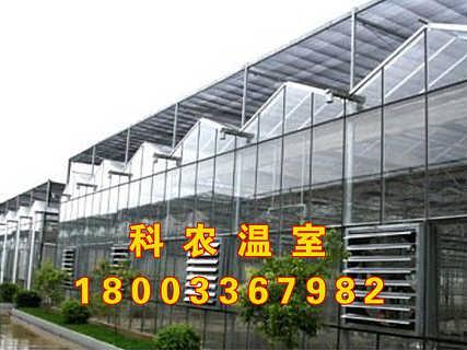 黑龙江建设厂家科农白菜价格约起来-永清县科农农业开发有限公司