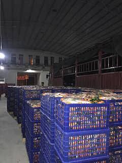沃柑、火龙果开始大量上市,找广西南宁市武鸣县山山秀果