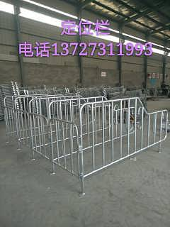 定制镀锌材质母猪怀孕定位栏厂家生产高床限位栏