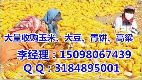 玉米价格持续高涨|垄上收购小麦大豆(实力厂家)