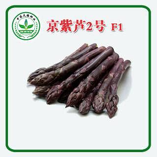 京紫芦2号F1紫芦笋种子,芦笋种子价格,北京中农天腾种业全国经销