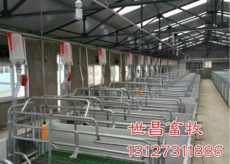 河北世昌免费设计安装自动化猪用料线育肥猪上料系统电话