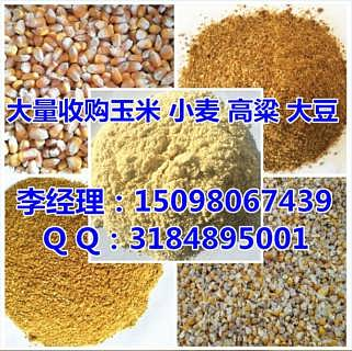 今天玉米收购价|高价收购玉米(实力厂家)