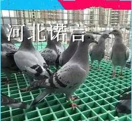 养殖玻璃钢格栅达尔罕茂明安联合旗养殖玻璃钢格栅生产厂家