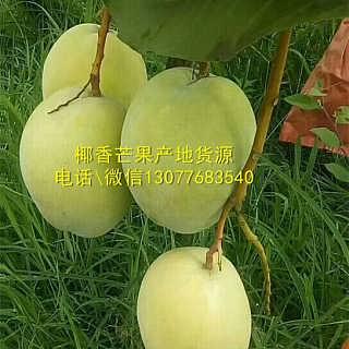 批发椰香芒果水果产地直发一件代发8斤包邮礼盒混批椰香芒批发价格