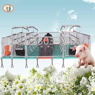 复合母猪产床多少钱双体加重老母猪产仔床