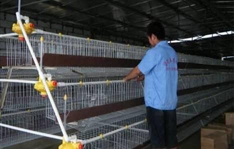 养殖场鸽子笼,江苏鸽子笼,鸽子笼批发
