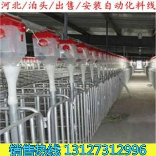 出售全自动化喂猪设备料线全国销量领先自动化上料系统-泊头世昌畜牧机械有限责任公司