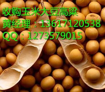求购大量玉米小麦大豆