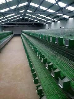 新型兔笼生产厂家现货销售