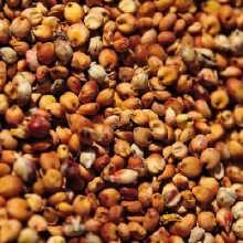 成都蜀窖酒厂长期求购玉米高粱小麦碎米等
