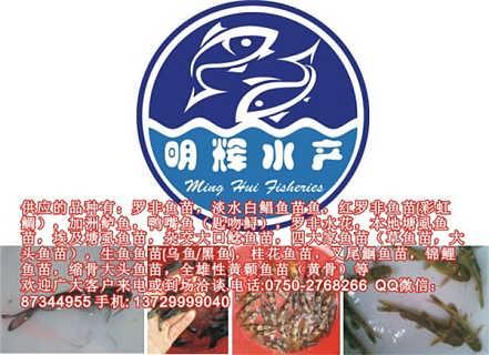 银鳕鱼苗图片