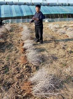 吉林省白刺苗木优质供应商,白刺苗木合作社