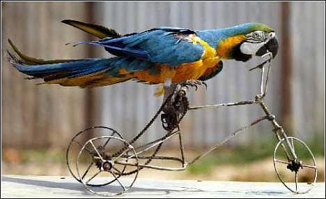 东莞特色动物明星鹦鹉表演