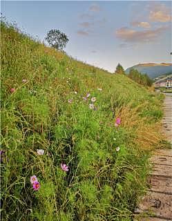 客土喷播施工边坡植草绿化