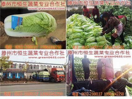 山东枣庄滕州大白菜最新价格