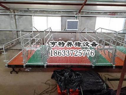 热镀锌母猪产床复合漏粪地板猪栏厂家