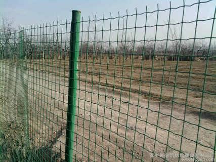 养鸡围栏网 养鸡隔离网批发 养鸡的铁丝网